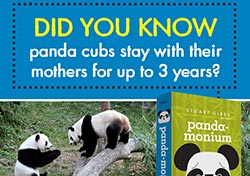 Panda-Monium Graphic