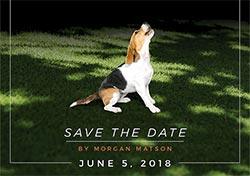 Save the Date Animated Graphic